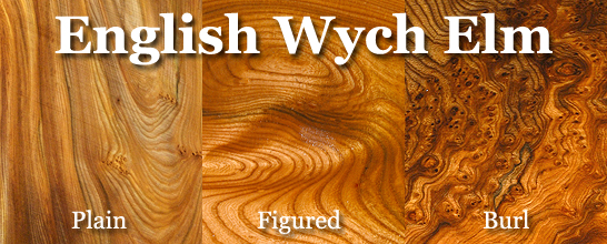 Elm (English Wych)