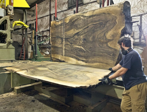 "Cutting 67"" wide, 10/4 English Walnut"
