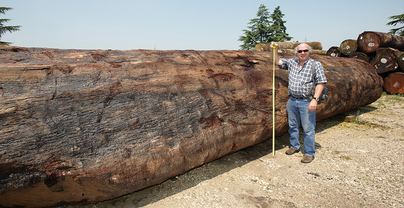 rick hearne measuring sapele log