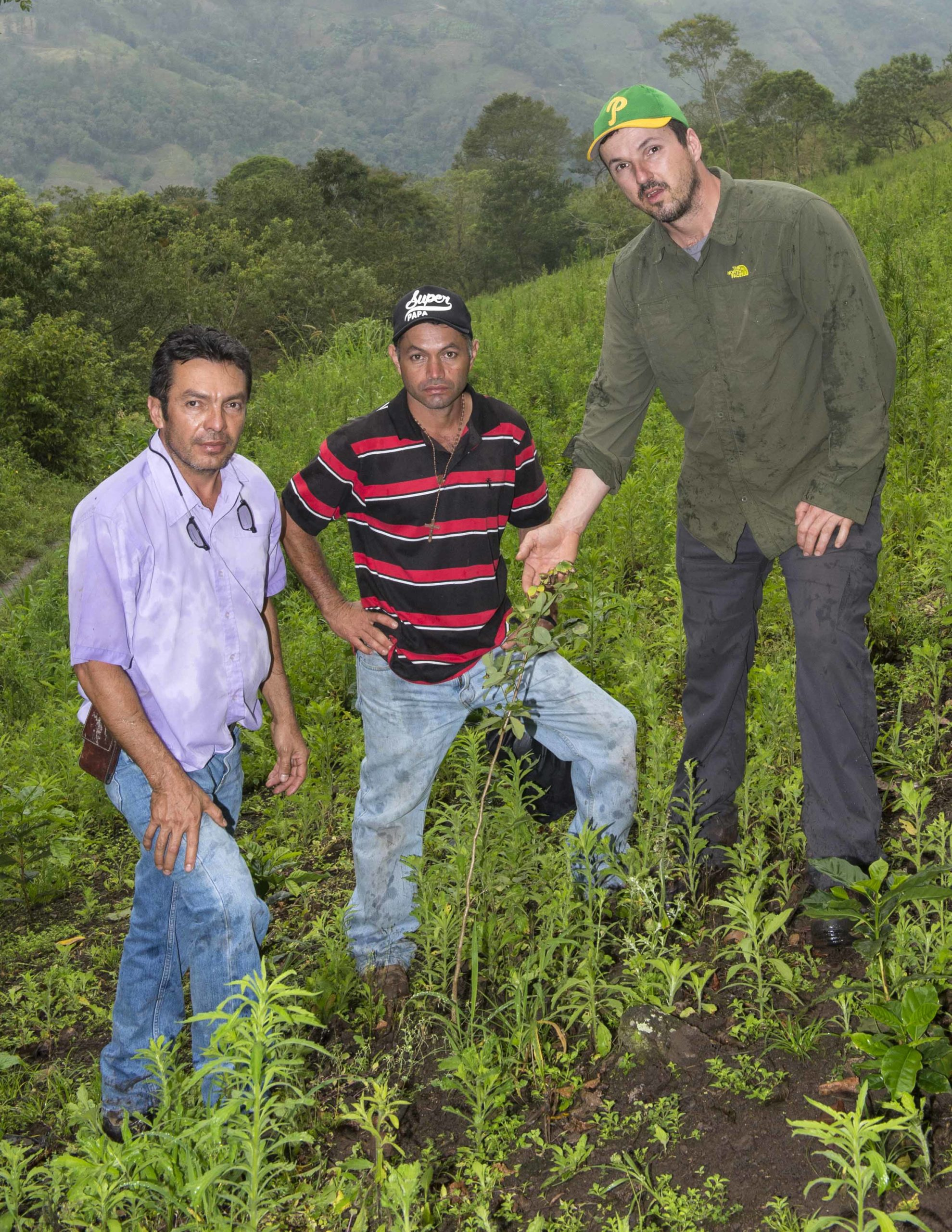 Planting a Rosewood Forest on a Sustainable Harvesting Coffee Farm