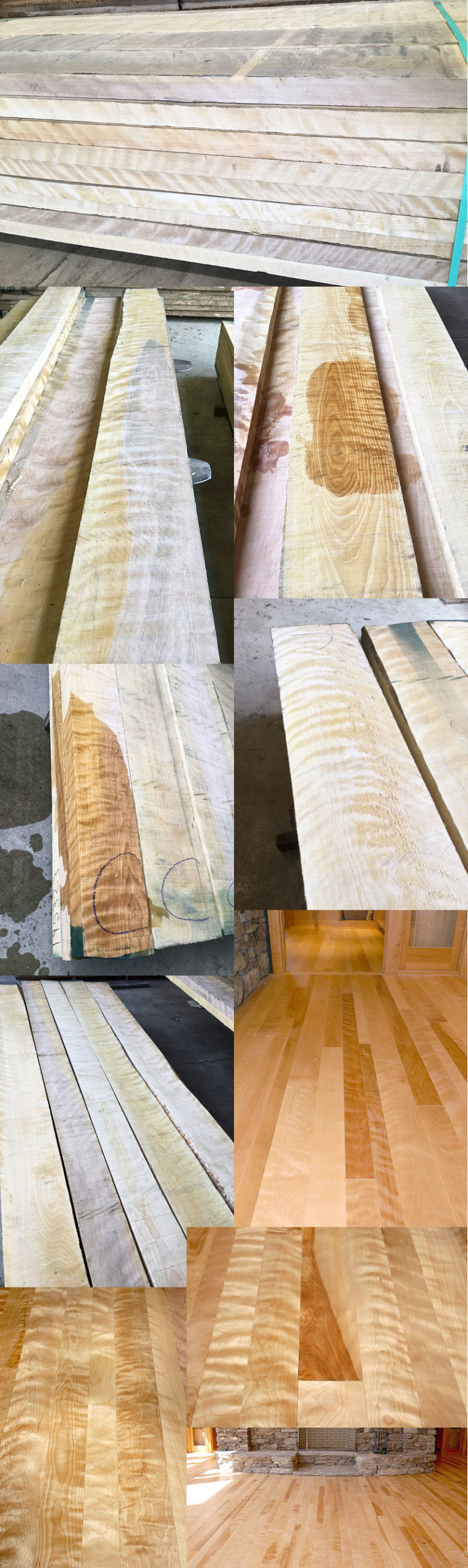 birch wood sample pictures