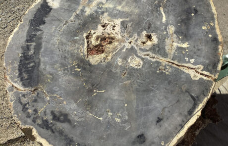 Petrified wood cookie at Hearne Hardwoods Inc.