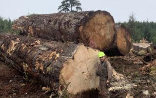 Buy Sitka Spruce at Hearne Hardwoods Inc.