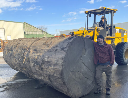 New Arrivals:  Sitka Spruce Logs from Alaska