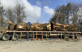 """Our """"trial, larger than normal, Walnut"""". This log averaged 40-48"""" wide by 19 feet - The crotch end spans out to more than 70"""". ~ Hearne Hardwoods Inc."""