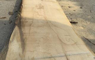 cutting a 30 foot white oak log at Hearne Hardwoods Inc.
