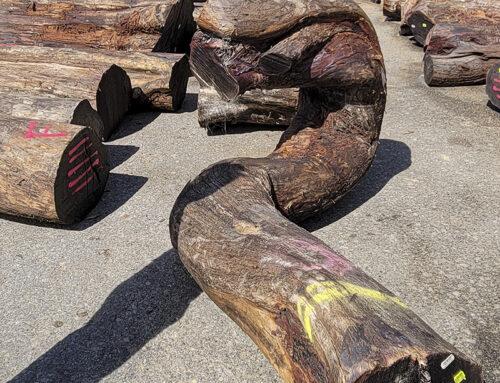 A New Shipment Of Koa Logs Has Arrived